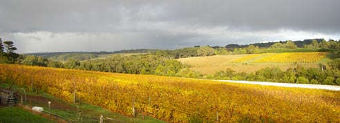 Vineyard_autumn